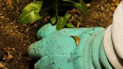 МОСВ съветва: Не садете тези 10 растения в градината си