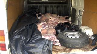 """Задържаха 300 кг агнешко месо без документи на АМ """"Тракия"""""""