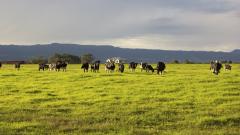 Правителството одобри програма за профилактика и контрол на болестите по животните