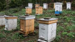 """Пчеларите получават около 2,4 млн. лв. държавна помощ """"де минимис"""""""