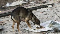 9 522 бездомни кучета у нас по-малко от 2013 година насам
