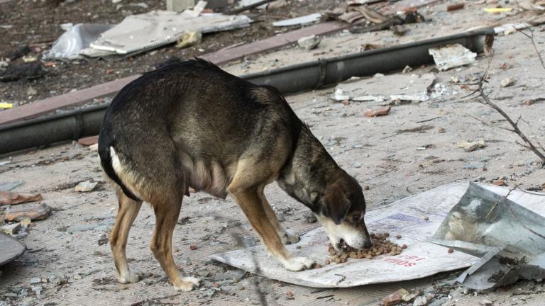 Организация и жители подозират община, че трови бездомните кучета