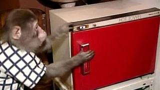 """Кога да кажем на сервитьора ни """"маймуна"""" не е обида?"""