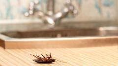 Как да забравим за хлебарките в кухнята
