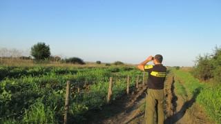 Още 20 км и оградата срещу румънските свине ще е готова