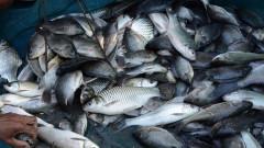 Около 250 кг незаконно уловена риба заловиха инспектори в Бургас