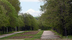 Озеленяват столицата с нови дървета