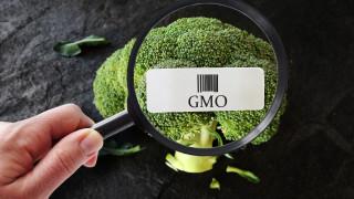 Забраняват рекламата на ГМО