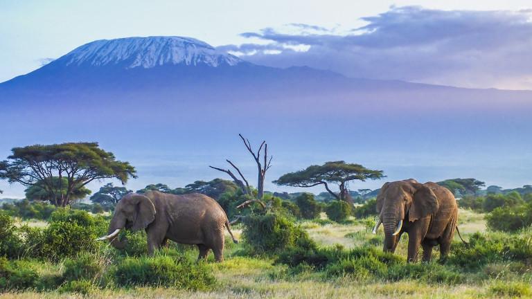 Доклад на Световния фонд за дивата природа (WWF) посочва за