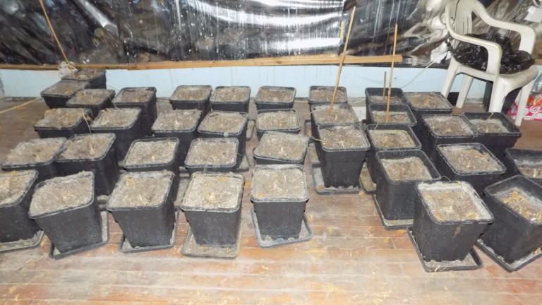Полицията откри високотехнологична оранжерия за марихуана в частен имот в