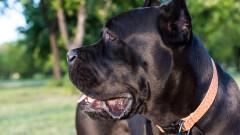 5 домашни кучета убиха мъж в Софийско