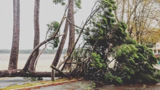 Ветрове до 160 км/ч оставиха без ток 140 000 домакинства във Франция