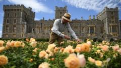 10-годишен спад на заетостта във Великобритания