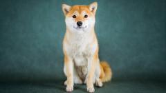Dogecoin отново тръгна нагоре заради Мъск и други знаменитости
