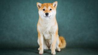 Недоразумението Dogecoin