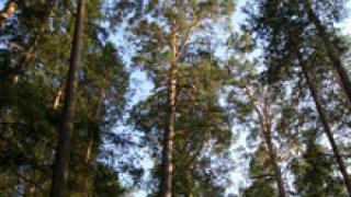 Подаряват гори на бизнесмени, твърдят еколози