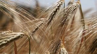 ЕК възстанови на България над 500 млн. лв. земеделски субсидии