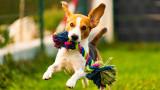 Кучетата, научаването на нови думи и колко бързо ги запомнят