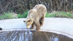 Почина една от най-старите мечки от парка в Белица