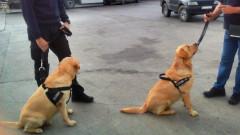 Две нови кучета се борят с контрабандата на Капитан Андреево