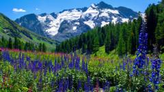 Колко точно струва цялата природа на Земята?