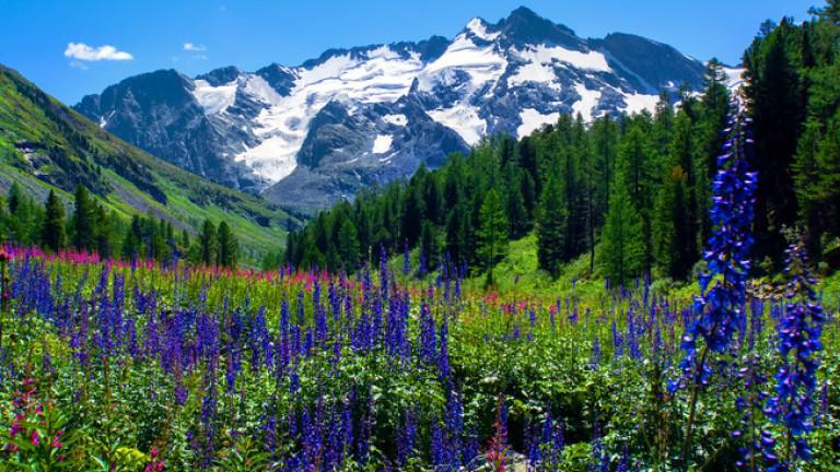 Снимка: Колко точно струва цялата природа на Земята?