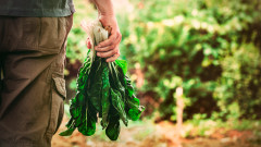 Защо да консумираме повече сезонни продукти
