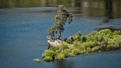"""350-годишен бор от Чехия стана """"Европейско дърво на 2020"""""""