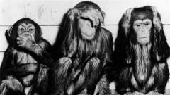 Опитът на СССР да създаде хибрид между човек и маймуна