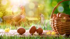 Големият плюс на яйцата от свободно отглеждани кокошки