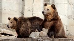 Образователна разходка край животните за 130-та годишнина на столичния зоопарк
