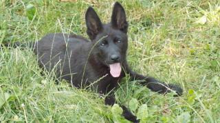 Община Горна Оряховица плаща 70 000 лв. на мъж, нахапан от бездомно куче