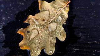 В Ловеч вали дъжд, пътищата са с ограничена видимост