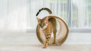 60% от българите не кастрират своите котки