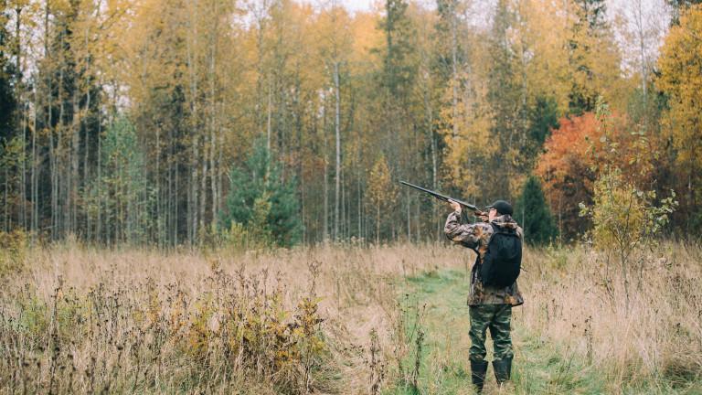 Агенцията по горите напомня на ловците да се дезинфекцират заради чумата по свинете