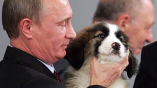 Кучето, подарено на Путин, е добре