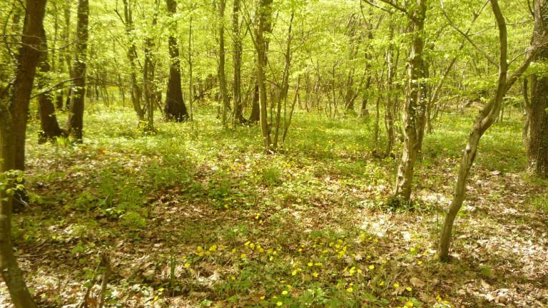"""Инициатива пази от сеч горските площи над квартал """"Аспарухово"""""""