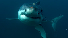 Седмицата на акулите
