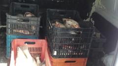Хванаха бус с 200 кг незаконна риба в Бургас