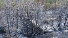 Природозащитници са притеснени за биоразнообразието в Кресненския пролом