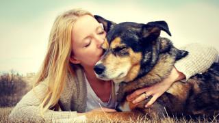 Кучетата не бива да се прегръщат