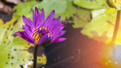 Разнообразието от листа в природата - източник на удивление и очарование