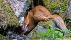 Най-добрите снимки на дивата природа