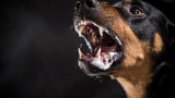 Какво да правим, ако ни нападне куче