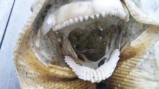 Останки от тайнствено морско същество озадачиха хората в Нова Зеландия