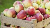 99% от търговците лъжели, че плодовете и зеленчуците са български