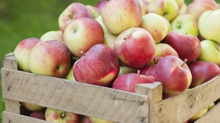 Спряха 22 тона ябълки с неясен произход на македонската границата