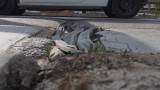 Жители на благоевградско село недоволстват заради разрушени улици