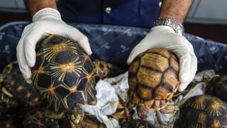 Костенурки, хамелеони и бебета змиорки пътуват контрабанда през България