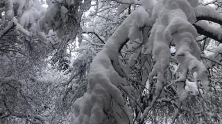 Пампорово посрещна есента със сняг